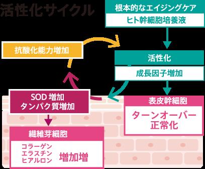活性化サイクル イメージ画像